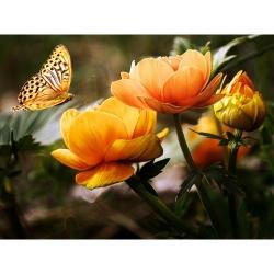 Pictura pe numere - Panza din bumbac pe rama de lemn 40*50 cm - Fluturele si craiesele (WM-628)